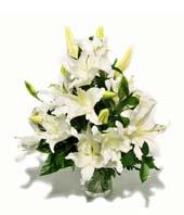Hong Kong, 6 white lilies